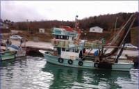 Kocaeli 12,50 Trol Teknesi